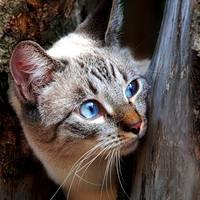 http://images.vfl.ru/ii/1401628100/8df2b51e/5309475_m.jpg