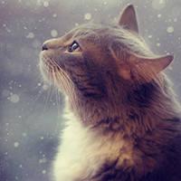 http://images.vfl.ru/ii/1401628100/adc8f09c/5309478_m.jpg