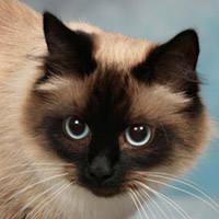 http://images.vfl.ru/ii/1401628100/d191692a/5309482_m.jpg