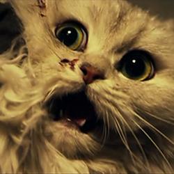 Кот: Глаза, которые видят смерть (2011) 17118612