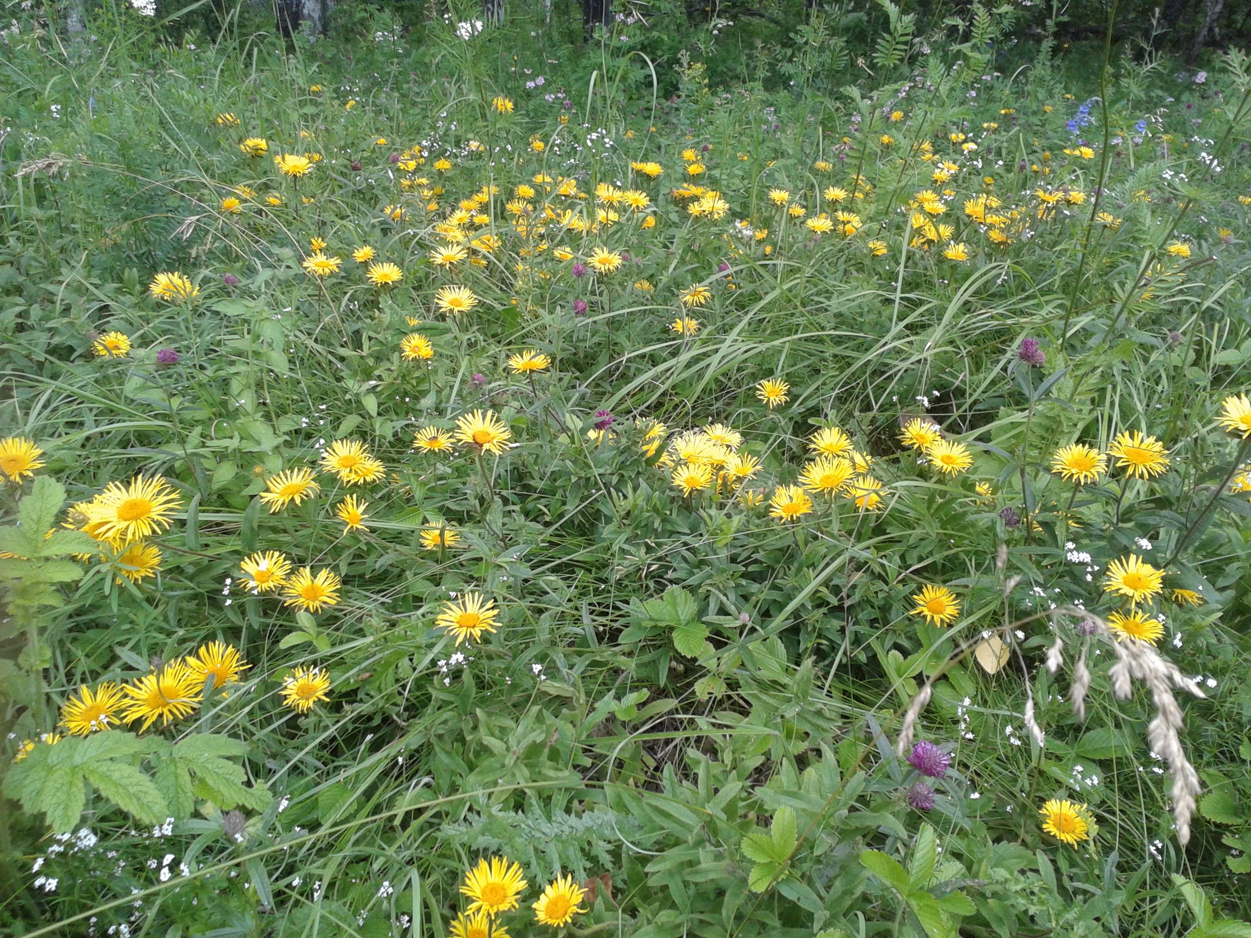 колье итальянские лесные цветы башкирии желтым цветом фото помощью лобзика нужно
