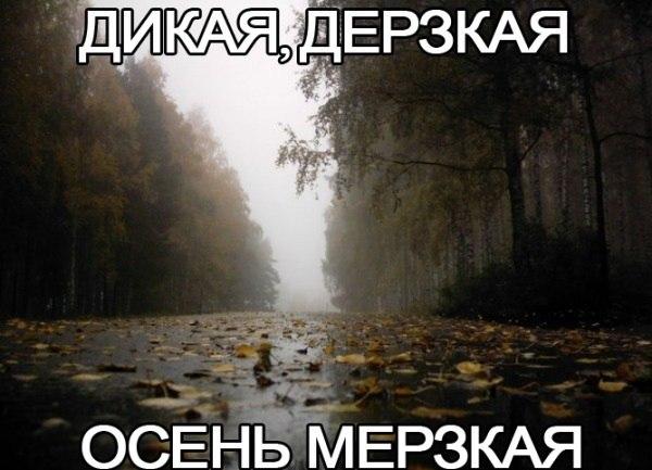 https://images.vfl.ru/ii/1504526992/22b691bb/18478268.jpg