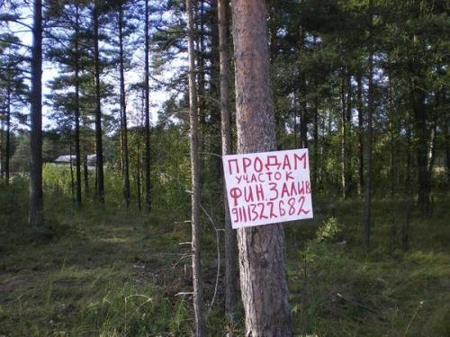 https://images.vfl.ru/ii/1523213856/91d54de6/21301326.jpg