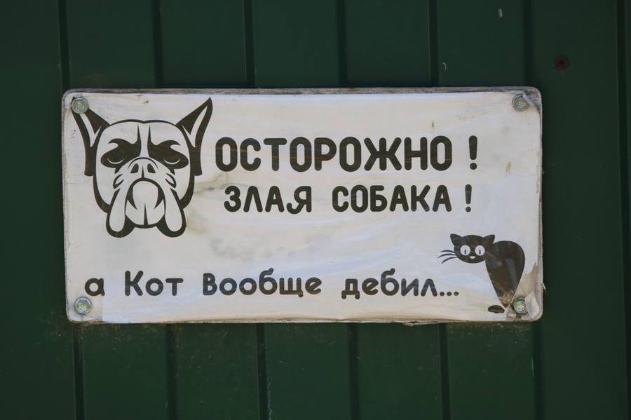 Кот дебил, собака злая, хозяин