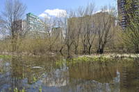 http://images.vfl.ru/ii/1526983313/6180363f/21842114_s.jpg