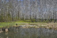 http://images.vfl.ru/ii/1526983635/906b2474/21842174_s.jpg