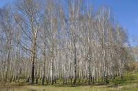 http://images.vfl.ru/ii/1526983847/4db9c679/21842235_s.jpg