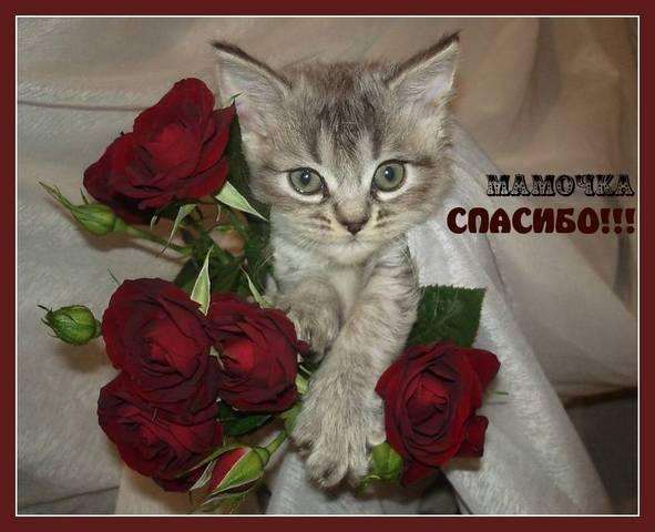 http://images.vfl.ru/ii/1531727276/eeb983e2/22501552_m.jpg