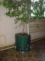 http://images.vfl.ru/ii/1532802483/7e565965/22665076_s.jpg