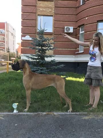 http://images.vfl.ru/ii/1532849358/beda77bf/22669983_m.jpg