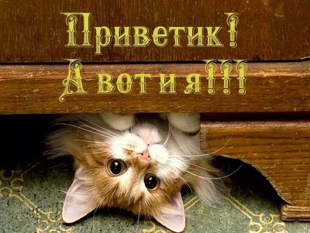 http://images.vfl.ru/ii/1533795013/81c8ce4f/22819851_m.jpg