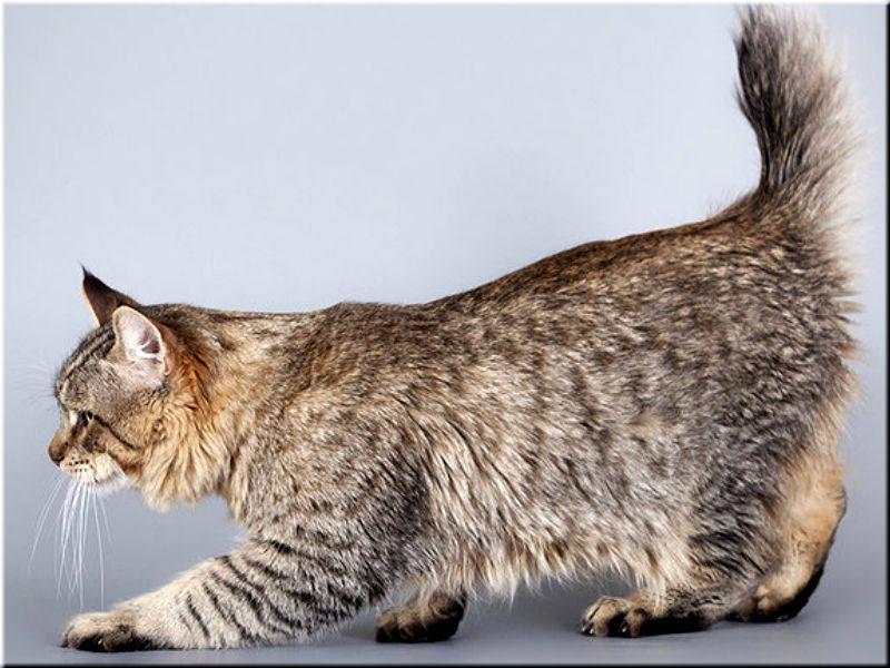 Фото кошек разных пород на рабочий стол доски необходимо