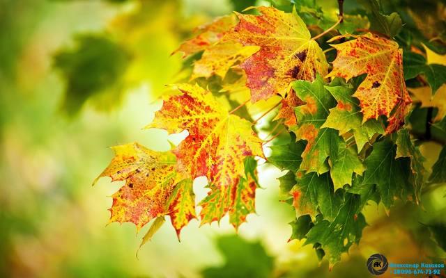 http://images.vfl.ru/ii/1536464450/cbb22219/23253001_m.jpg