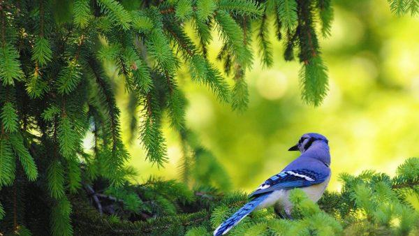 Птичка и ель