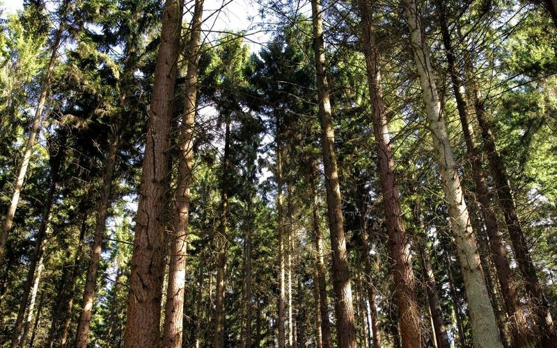 Мещёрские леса