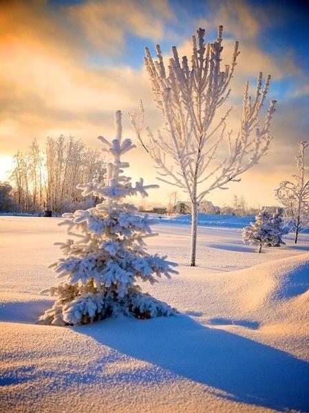 Под зимним солнцем января