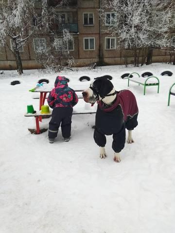 http://images.vfl.ru/ii/1546804208/bcba7fad/24845636_m.jpg