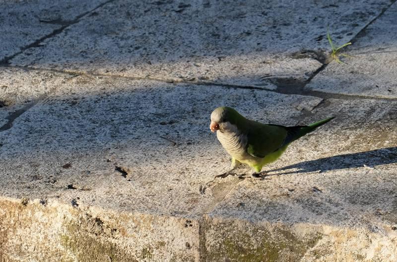 Птички и Фрося