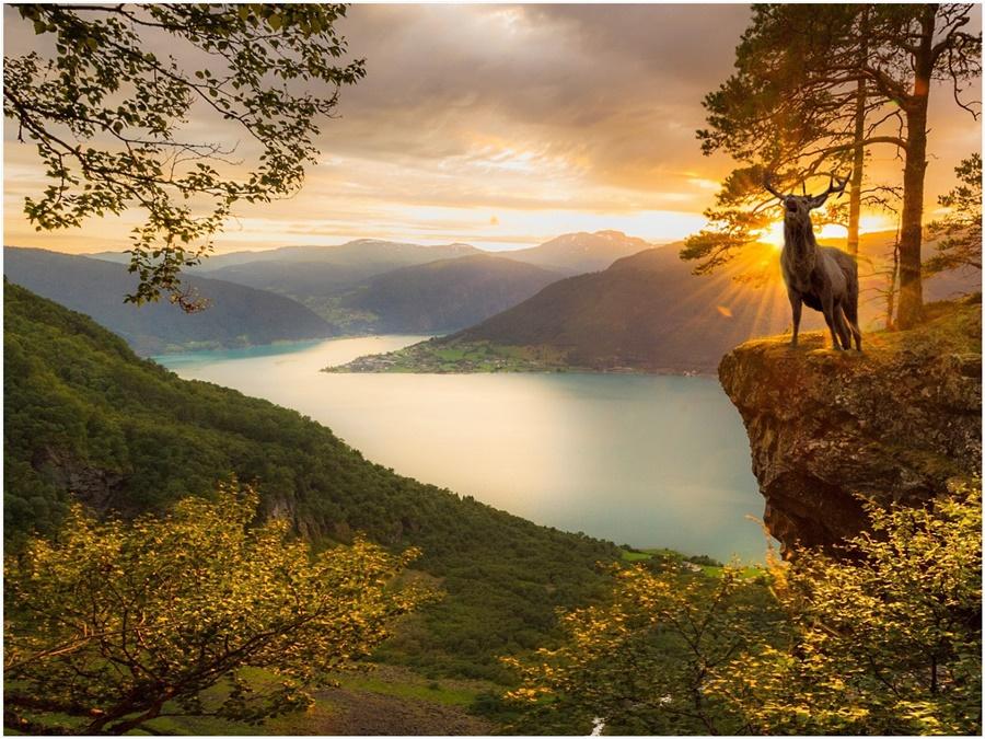 Norway Deer at sunset in Norway