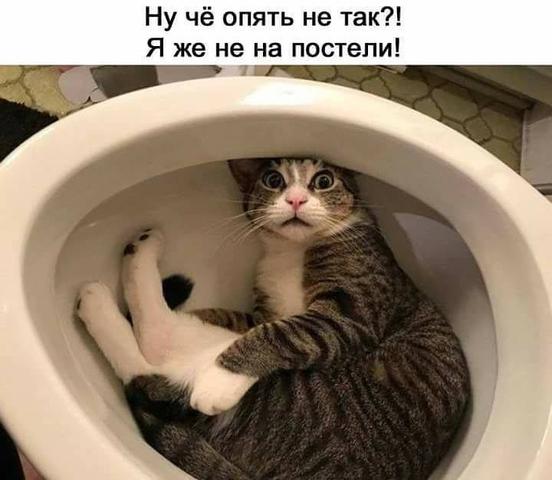 https://images.vfl.ru/ii/1551423475/1088d6f3/25591196.png