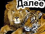 Животные-тигры1