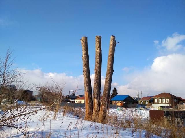 http://images.vfl.ru/ii/1552832314/882a75a9/25802062_m.jpg