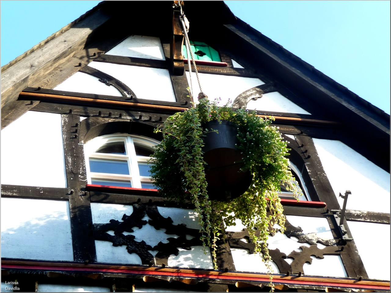 Linz am Rhein. 18.08.09 d (59)