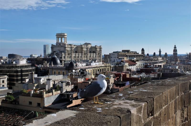 Фотосессия чайки в Барселоне