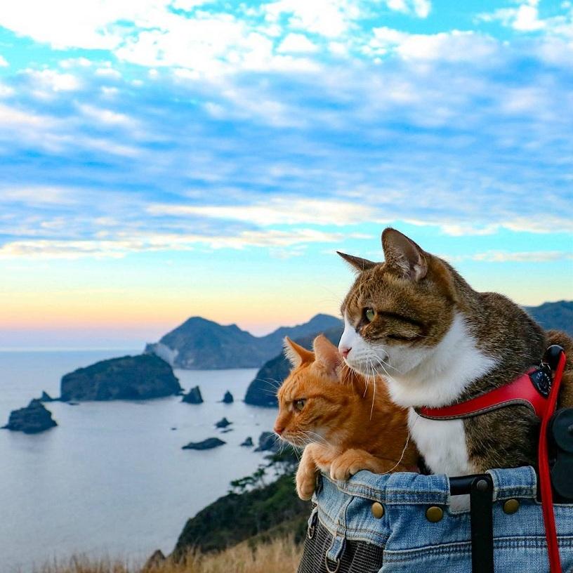 Путешествие кота в картинках