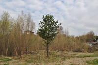 http://images.vfl.ru/ii/1557124174/eb3e0f22/26433183_s.jpg