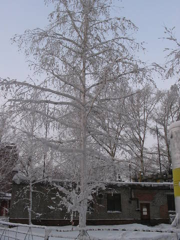 http://images.vfl.ru/ii/1559680635/a6a9c628/26778807_m.jpg