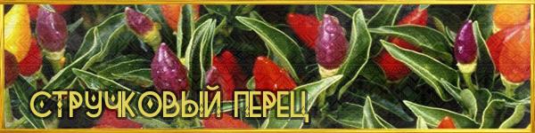 https://images.vfl.ru/ii/1561626278/1003f9d0/27023898.png