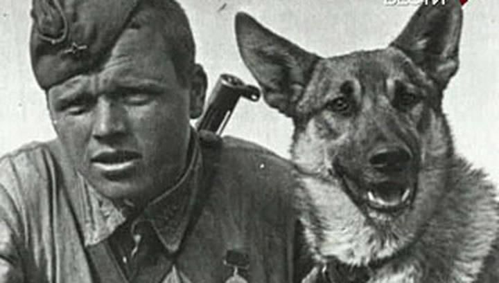 Подвиг пограничников и собак