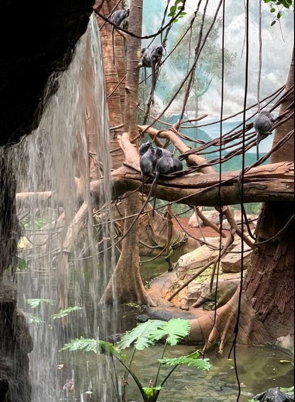 Зоопарки Нью-Йорка