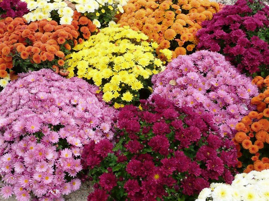 картинки многолетних уличных цветов эти кадры