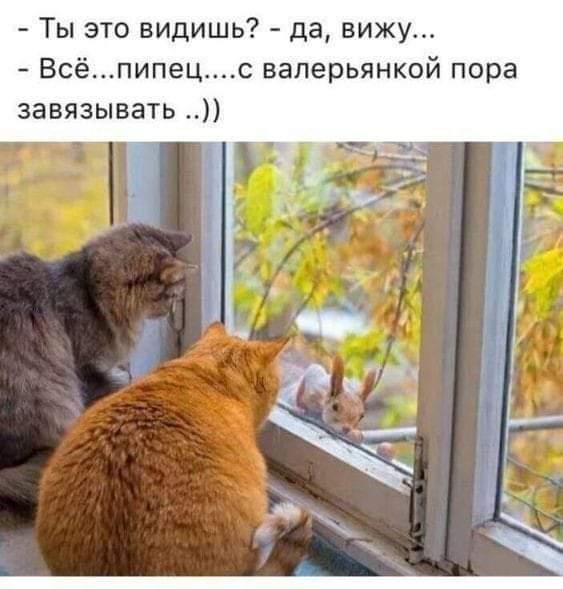 http://images.vfl.ru/ii/1569072421/c52ce66f/27935906.jpg