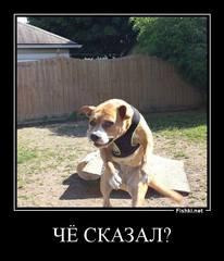 https://images.vfl.ru/ii/1569410467/9c1faec2/27972960.jpg