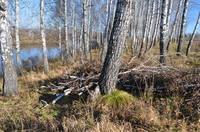 http://images.vfl.ru/ii/1571111342/488fde70/28196428_s.jpg
