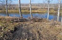 http://images.vfl.ru/ii/1571112018/33674ff4/28196473_s.jpg