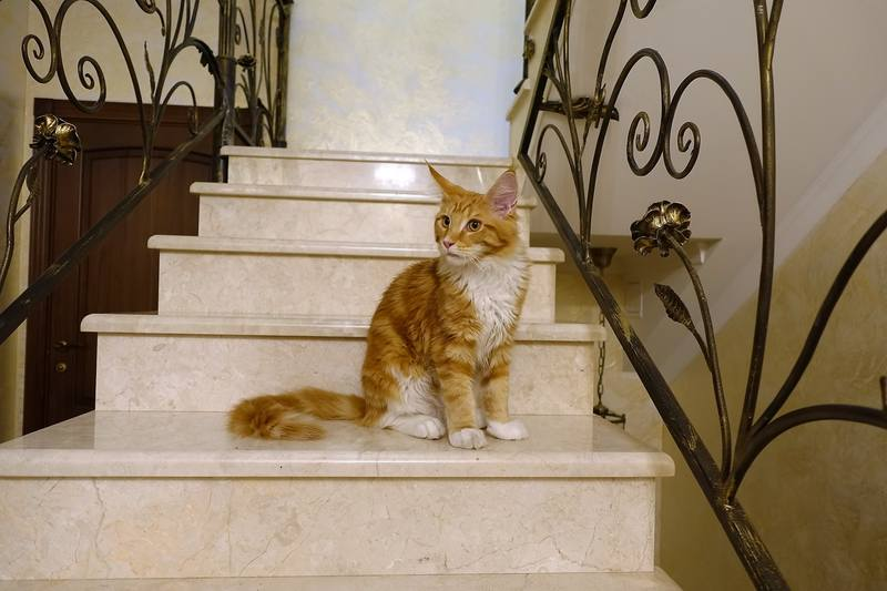 Кошачья фотосессия