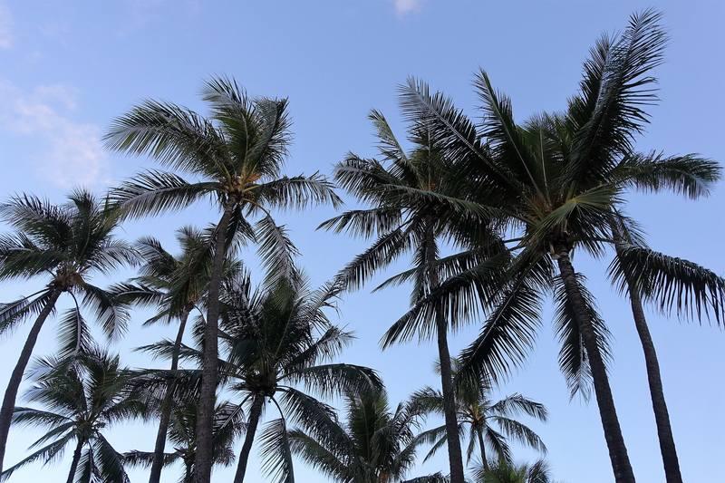 Прогулка по набережной Гонолулы
