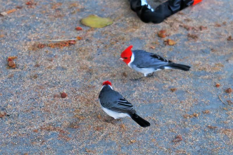 Гавайские птички