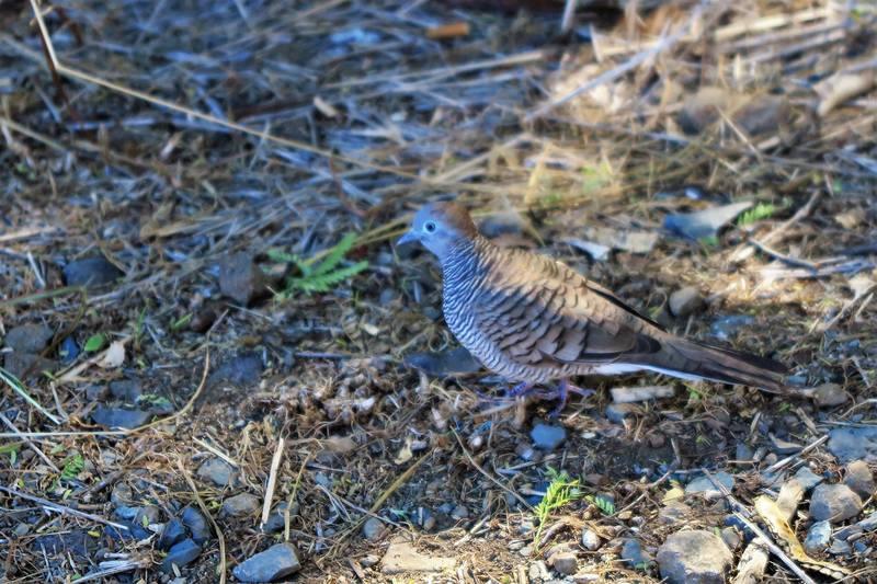 Птички Гавайев