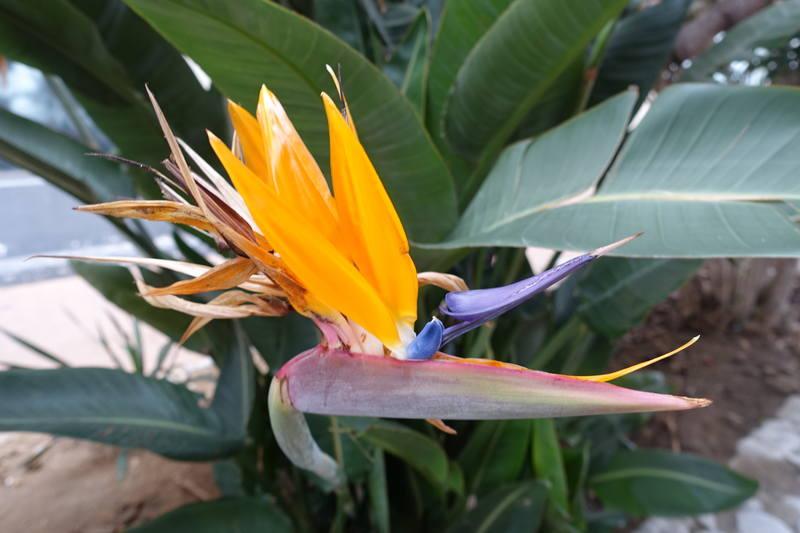 Ботанический сад Гибралтара Аламеда