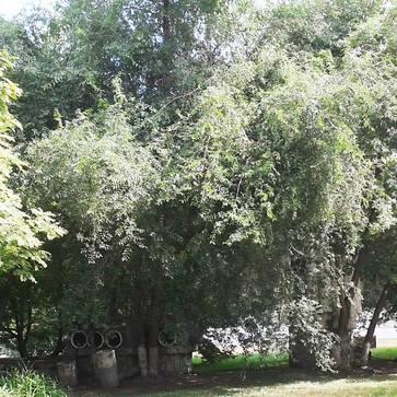 http://images.vfl.ru/ii/1594386733/36a71657/31040794_m.jpg