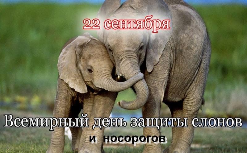 Всемирный день защиты слонов и носорогов