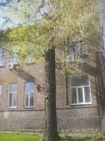http://images.vfl.ru/ii/1600954253/4cc11a0f/31731282_s.jpg
