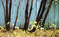 http://images.vfl.ru/ii/1609231656/d8818cfb/32802784_s.jpg