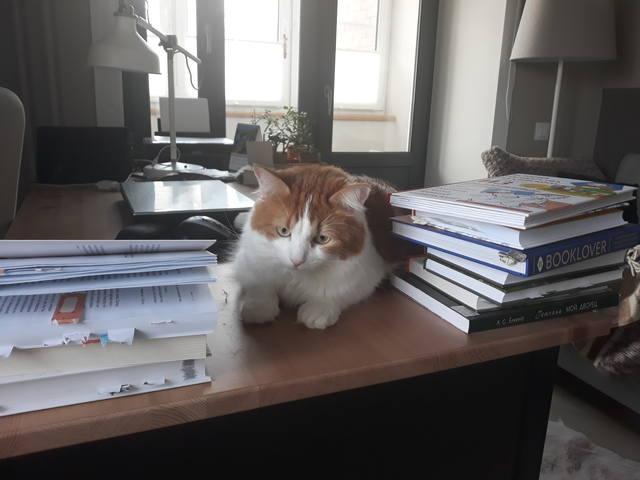 туся на столе с книгами