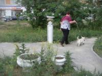 http://images.vfl.ru/ii/1614447827/cc55bde6/33497220_s.jpg
